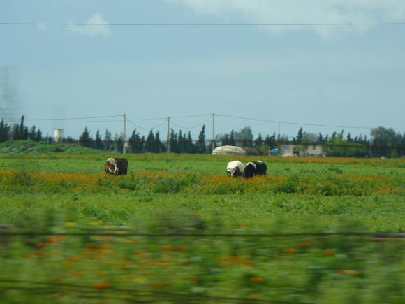 http://sousentendu.cowblog.fr/images/P1020867.jpg
