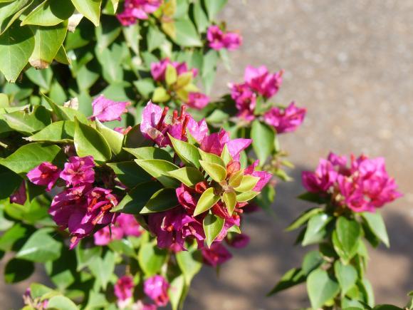 http://sousentendu.cowblog.fr/images/P1030010.jpg