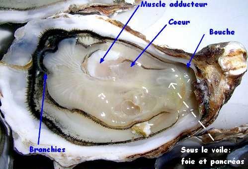 http://sousentendu.cowblog.fr/images/ScreenShot091.jpg